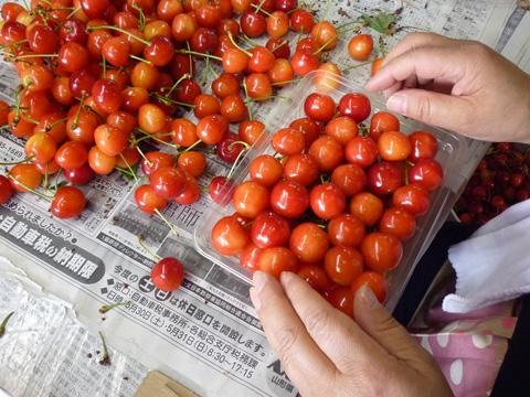 Cherry05.jpg