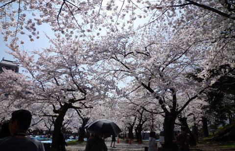 鶴ヶ城20090418_02.jpg
