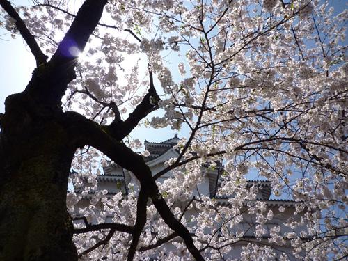 鶴ヶ城20090418_04.jpg