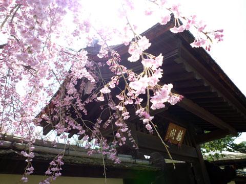 鶴ヶ城20090418_05.jpg