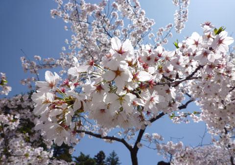 鶴ヶ城20090418_07.jpg