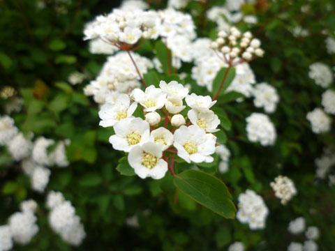 FlowerCenter_Kodemari.jpg