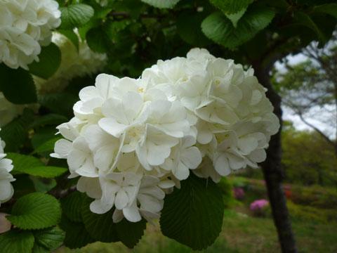 FlowerCenter_Ohtemari.jpg