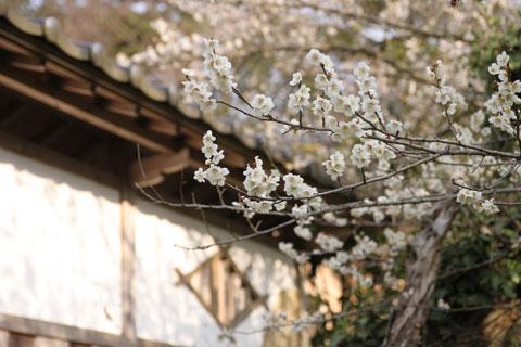 Senshoji_03.jpg