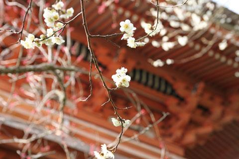 Senshoji_04.jpg