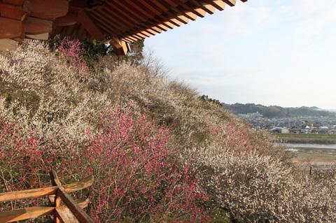 Senshoji_08.jpg